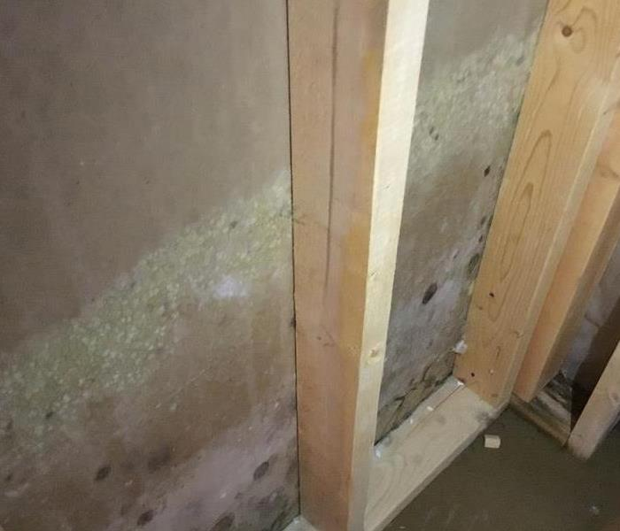 Help is Here to Remediate your Mold
