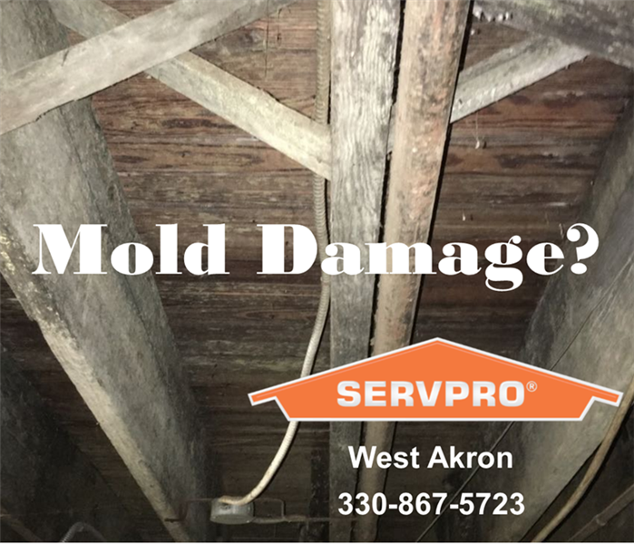 Mold Wood Rafters