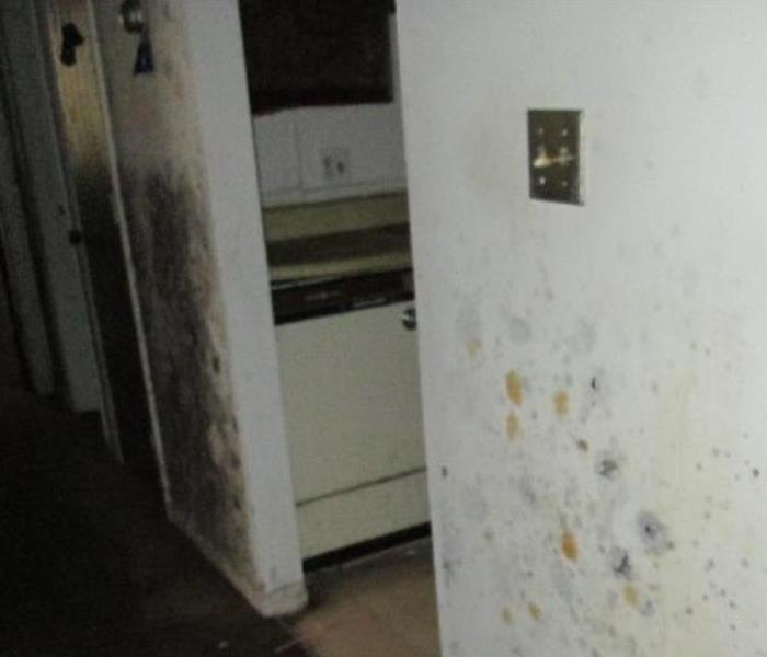 Mold Remediation Have you found Mold Growth on your Walls and/or Ceilings in your home?
